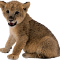 uploads lion lion PNG3808 9