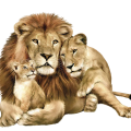 uploads lion lion PNG555 23