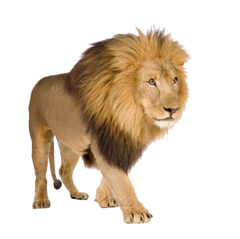 uploads lion lion PNG573 3