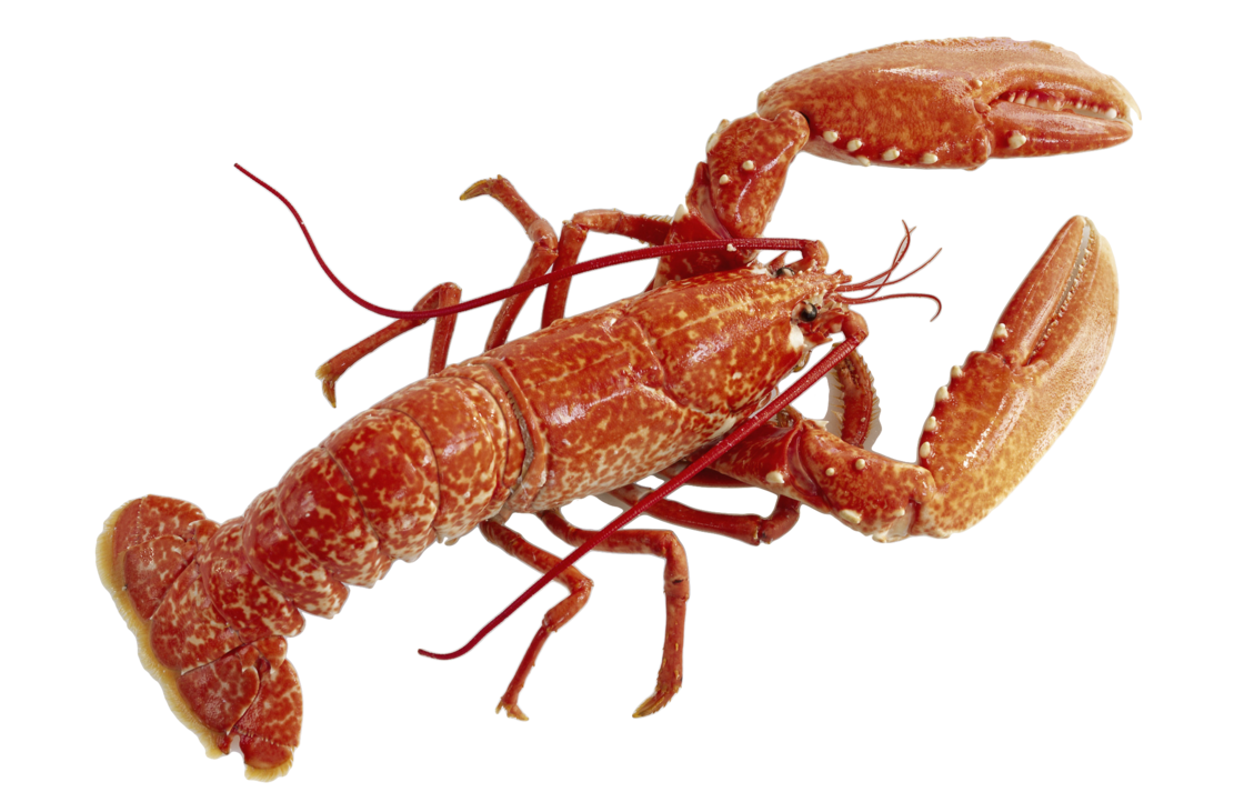 uploads lobster lobster PNG14264 4