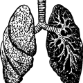 uploads lung lung PNG11 22