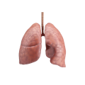 uploads lung lung PNG12 6