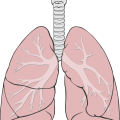 uploads lung lung PNG15 19