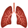 uploads lung lung PNG17 20