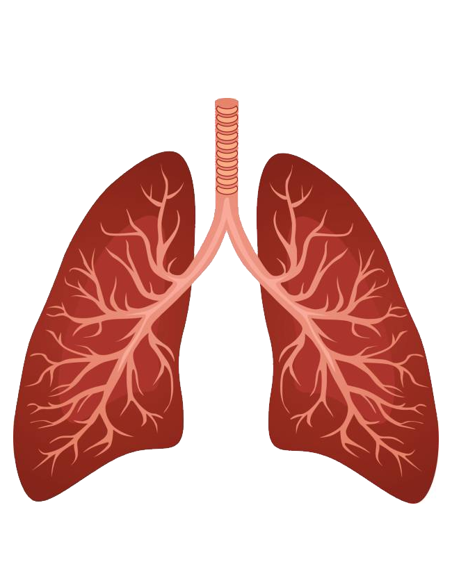 uploads lung lung PNG17 25