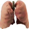 uploads lung lung PNG24 20