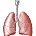 uploads lung lung PNG27 21