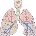 uploads lung lung PNG28 14
