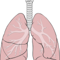 uploads lung lung PNG29 15