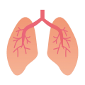 uploads lung lung PNG3 7