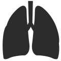 uploads lung lung PNG32 19
