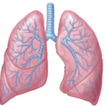 uploads lung lung PNG36 13