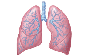 uploads lung lung PNG36 3