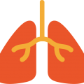 uploads lung lung PNG4 20