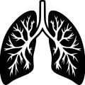 uploads lung lung PNG43 8