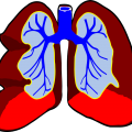 uploads lung lung PNG47 24