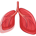 uploads lung lung PNG5 20