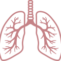 uploads lung lung PNG50 22