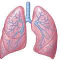 uploads lung lung PNG51 17