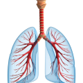 uploads lung lung PNG52 12