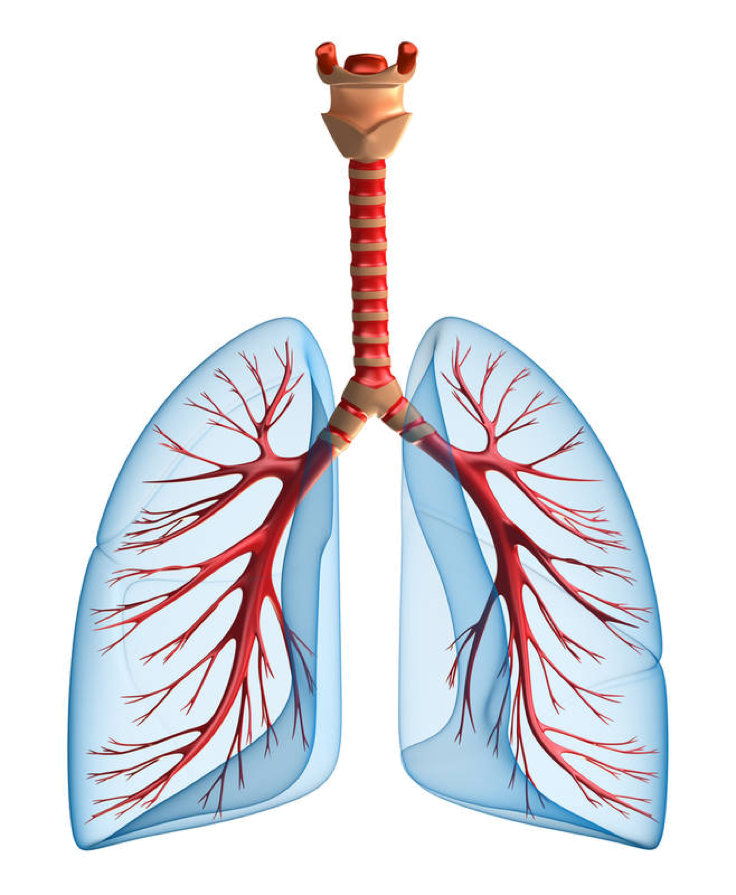 uploads lung lung PNG52 24