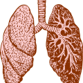 uploads lung lung PNG57 6