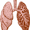 uploads lung lung PNG58 10