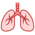 uploads lung lung PNG59 13