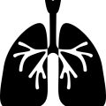 uploads lung lung PNG60 22