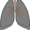 uploads lung lung PNG61 8