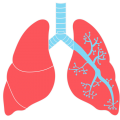 uploads lung lung PNG62 15
