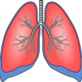 uploads lung lung PNG64 17