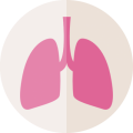 uploads lung lung PNG65 20