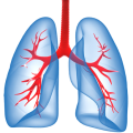 uploads lung lung PNG68 7