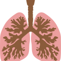 uploads lung lung PNG69 6
