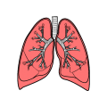 uploads lung lung PNG7 23