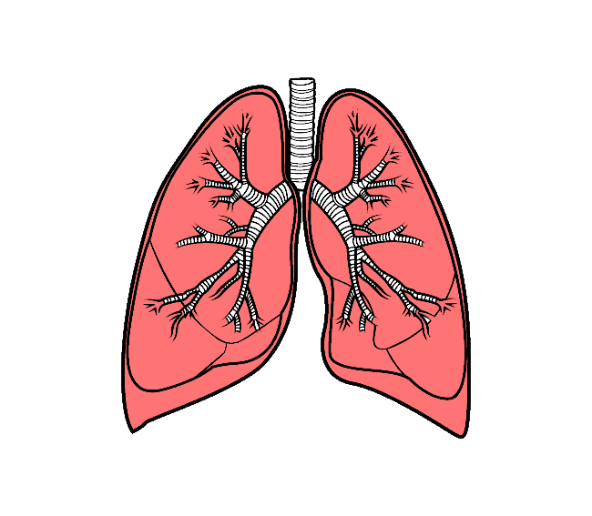 uploads lung lung PNG7 5