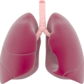 uploads lung lung PNG72 15