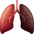 uploads lung lung PNG8 11