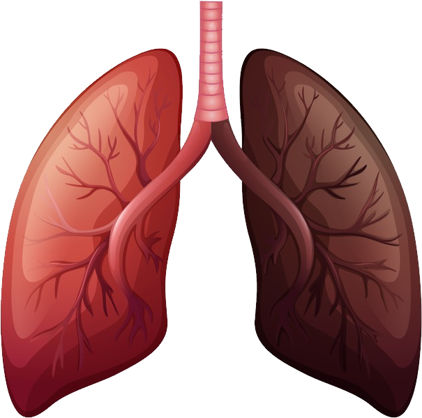uploads lung lung PNG8 24