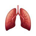 uploads lung lung PNG9 9