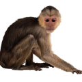 uploads monkey monkey PNG18716 80