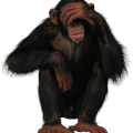 uploads monkey monkey PNG18722 70