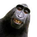 uploads monkey monkey PNG18727 79
