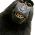 uploads monkey monkey PNG18728 83