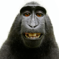 uploads monkey monkey PNG18729 71