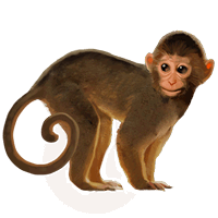 uploads monkey monkey PNG18733 3