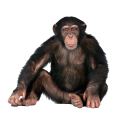 uploads monkey monkey PNG18736 65