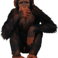 uploads monkey monkey PNG18737 73