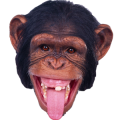 uploads monkey monkey PNG18744 84